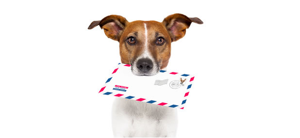 dog with envelope