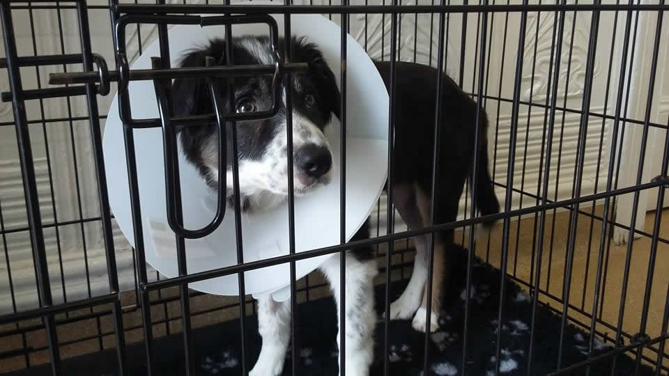 puppy in kennel with buster collar
