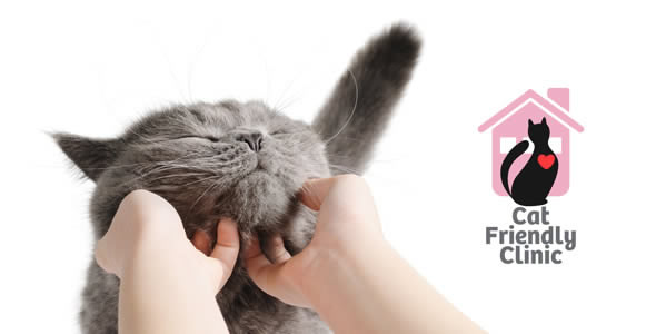 cat friendly practice and very happy cat Prospect House Vets
