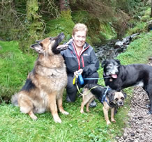Diane with Trooper , Sparky and Bill enjoying Gwydir Forest