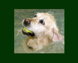 dog having hydrotherapy