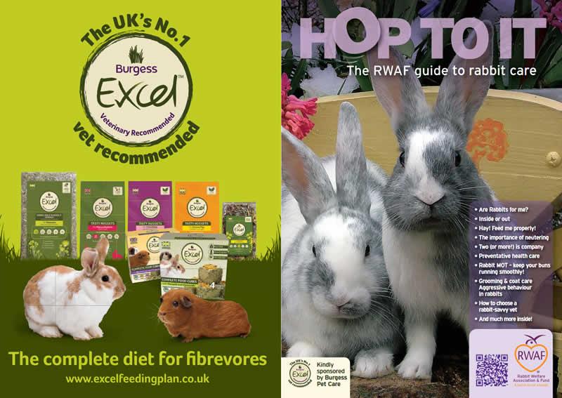 rabbit booklet