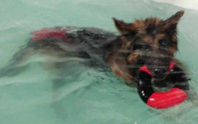 Raffa has Hydrotherapy