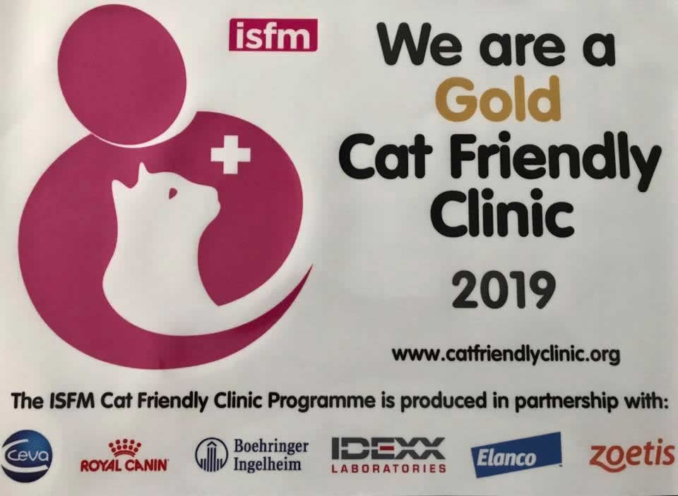 Prospect House Vets achieves Gold cat status