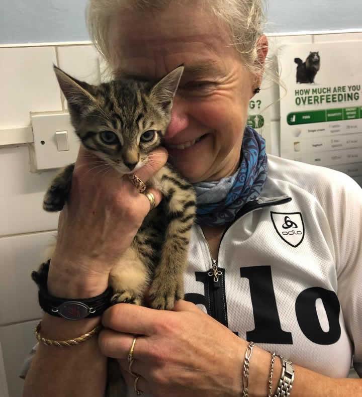 kitten Sid at Prospect House Vets