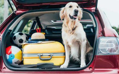 Pet travel scheme changes