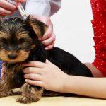 vaccinate puppy