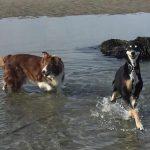 seaside dogs colwyn bay